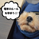 犬猫の電車利用・ルール・乗車規制まとめ