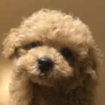 cropped-cropped-cha2_youtube_profile.jpg