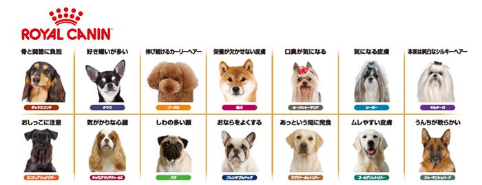 dogmonitor_address_0808