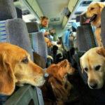 ペットと飛行機に乗る方法!国内航空会社編