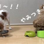 【本音レビュー】Butch Japan(ブッチジャパン)ドッグフード食べてみた